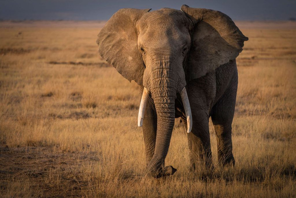 Tom-Stahl_WCNElephants-3
