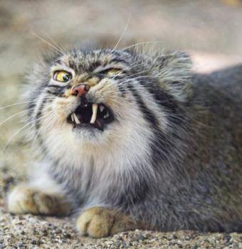 Meet Nature's Quirkiest Cats