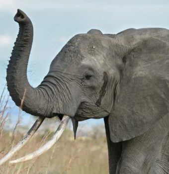China Suspends Ivory Imports for One Year
