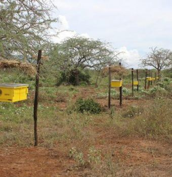 How Bees Save Elephants