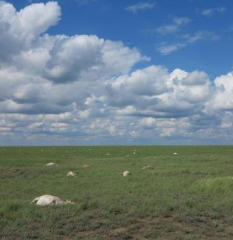 Finding Answers When Disasters Strike Saiga