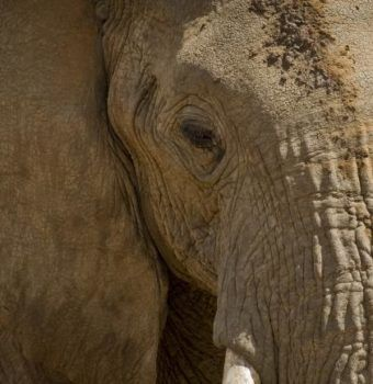 Important Step Taken for Hong Kong Ivory Ban
