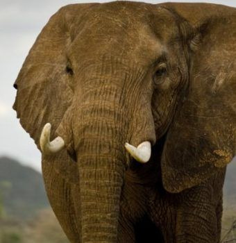 China to Formally Shut Down All Domestic Ivory Trade by End of 2017