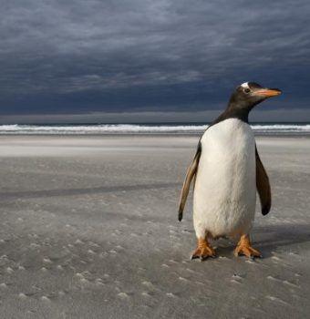 Protecting Penguin Habitat, Big and Small