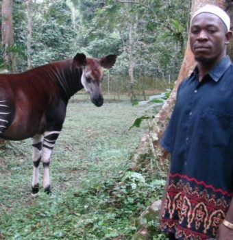 Safeguarding the Okapi Wildlife Reserve