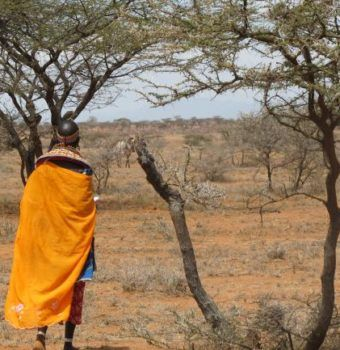 A Day in the Life of a Grevy's Zebra Scout