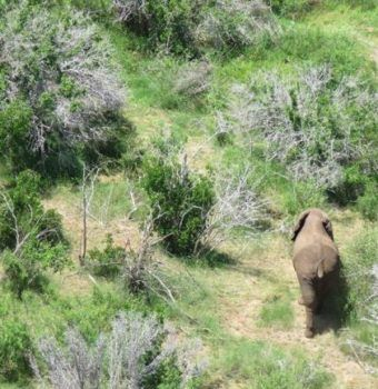 First Elephant Spotted in Somalia in 20 Years