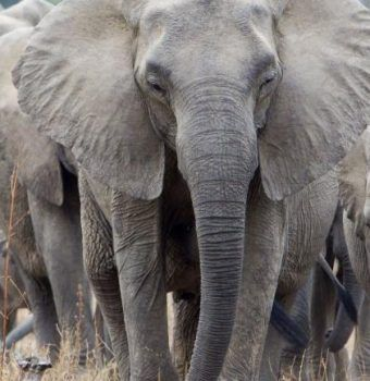 Justice for Elephants