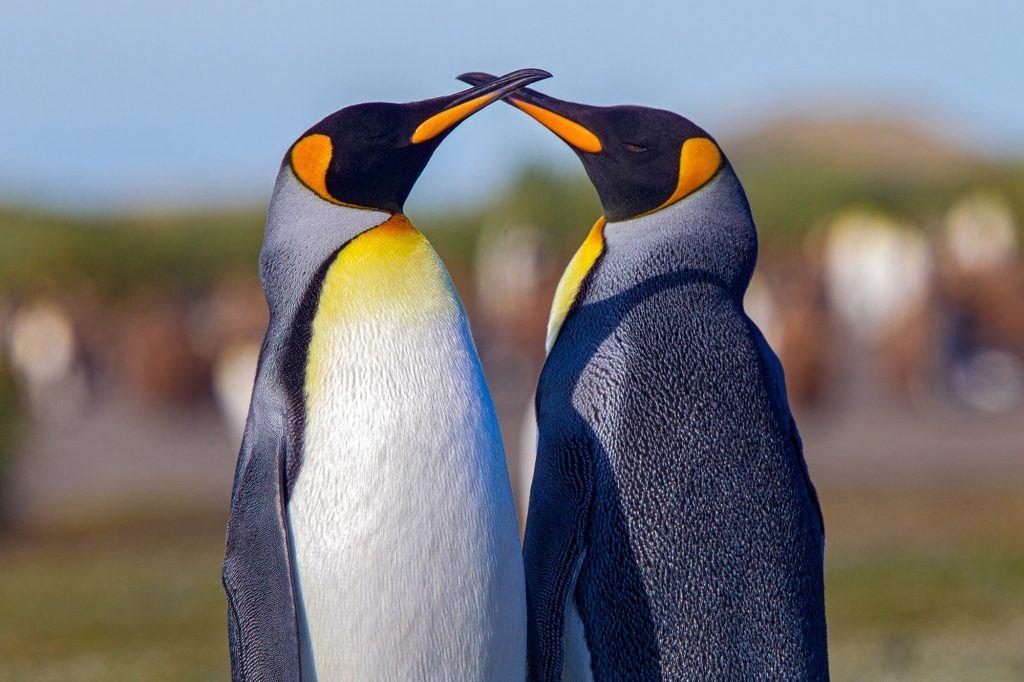 Susan-McConnell-Penguin-3