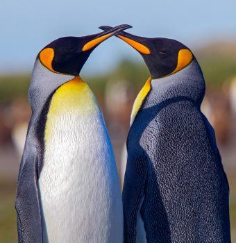 Penguins: Charming, Widespread, and Important