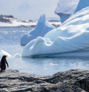 Penguins, the New Poster Species for Climate Change?