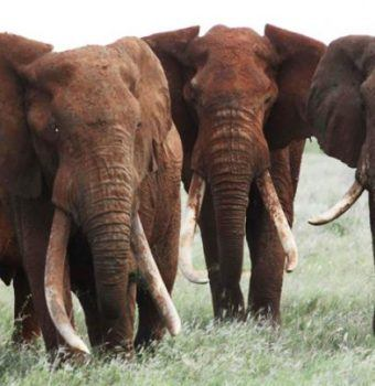 A Year of Progress for the Elephant Crisis Fund