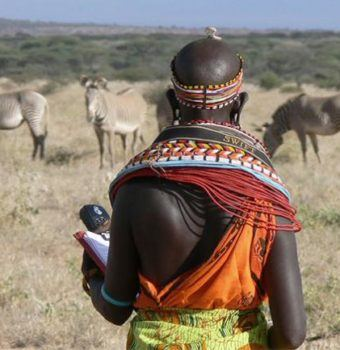 Grazing to Save Grevy's