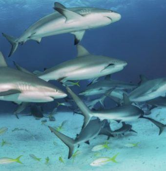 A New Image for Sharks