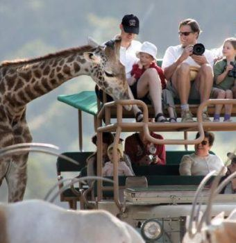 Conservation Speakers Connect with Guests at Safari West
