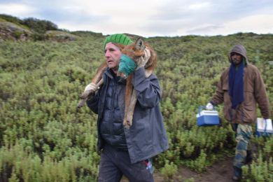 Ethiopian Wolf Conservation Program (Dr. Claudio Sillero)