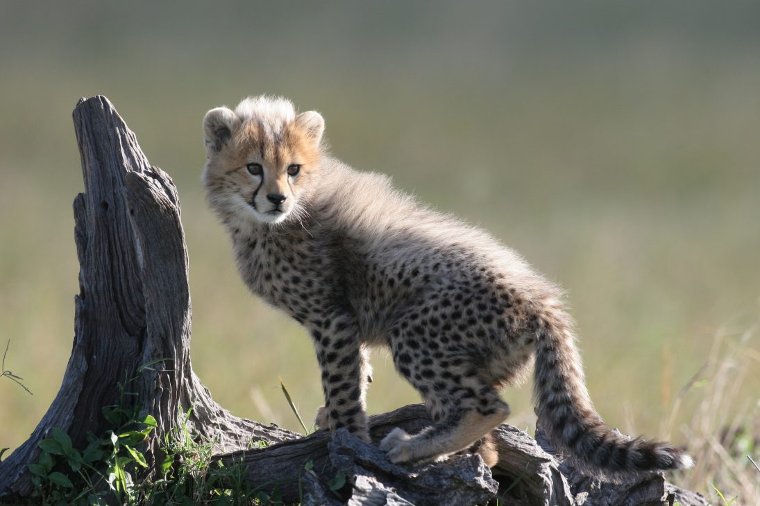 Cub in Sun